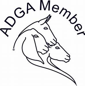 Nigerian dwarf | goats |NC | French angora | dairy | goats ...
