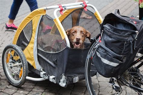 choose  dog carrier  dog trailer   bike