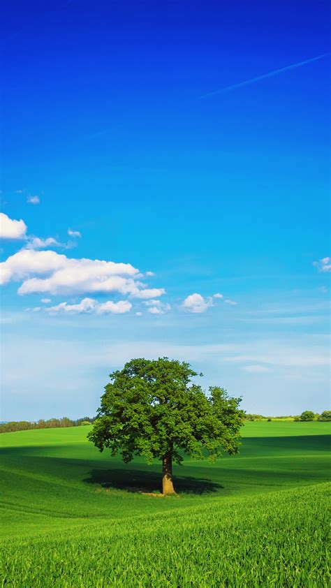 Blue Nature Wallpaper For Mobile by Hd Green Landscape Lonely Tree Sky Blue Clouds