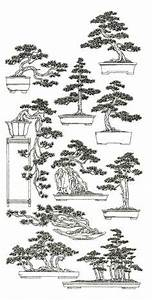 1000 ideas about juniper bonsai on pinterest bonsai With wiring pine bonsai