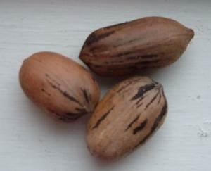 Types Of Pecans
