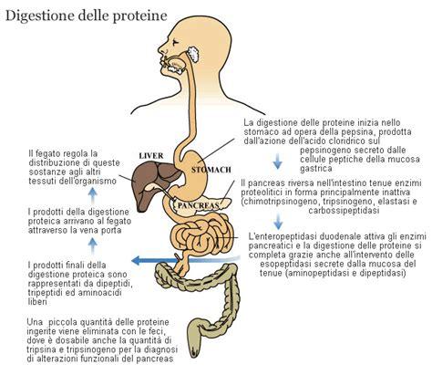 proctite ulcerosa alimentazione pepsina e pepsinogeno