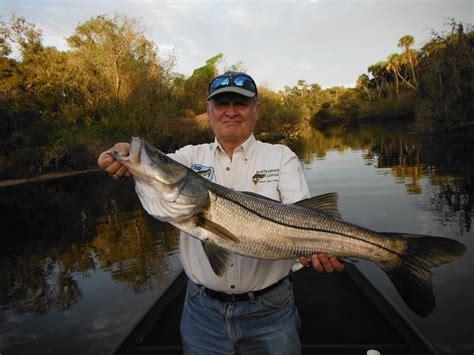 fishing snook sarasota myakka key siesta river florida fish caught species catch september report forecast monthly catfish charters fishinglidokey
