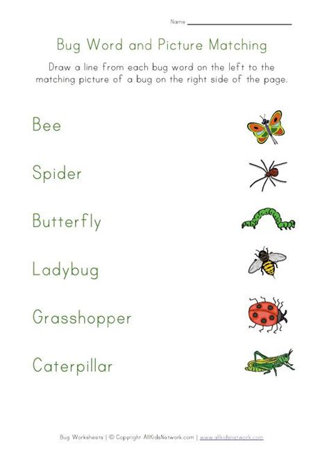 bug matching worksheet worksheets  kids insects  kids