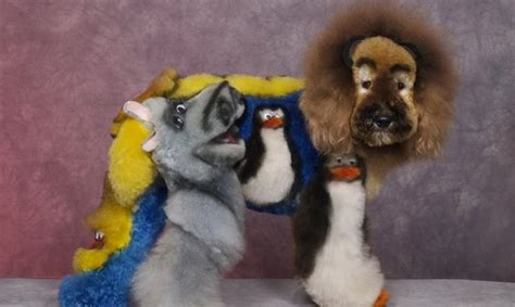 grooming competition dogs  dyed