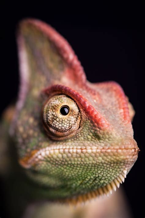 A Reptile Dysfunction Unlikely Sources Of Salmonella