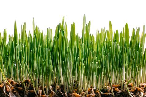Three Outstanding Shrub Varieties To Plant This Fall
