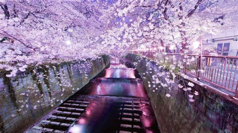 japanese aesthetic hd wallpapers