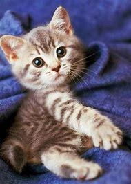 Kitties Cute Baby Kittens