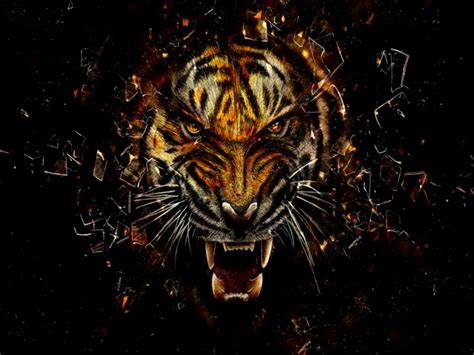 Cool Animal Wallpapers Hd - cool tiger wallpapers hd