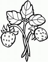 Strawberry Coloring Grapes Fruits sketch template