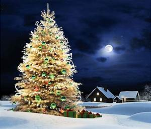 Outdoor, Christmas, Tree, Wallpaper, And, Background, Image