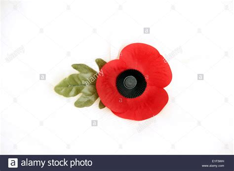 poppy images free remembrance poppy on a white background the poppy emblem for remembrance memory stock photo royalty free