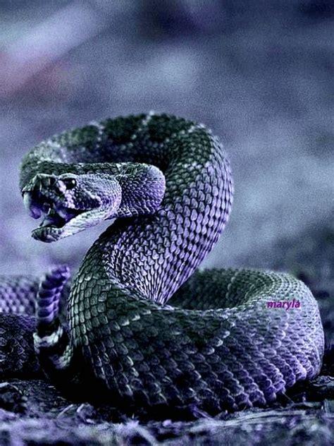 pin  phoenix  gif animations  maryla snake art