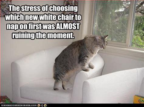 are cats treacherous