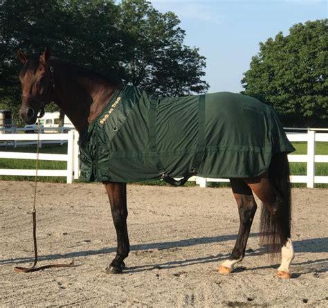 Back On Track Decke Pferd