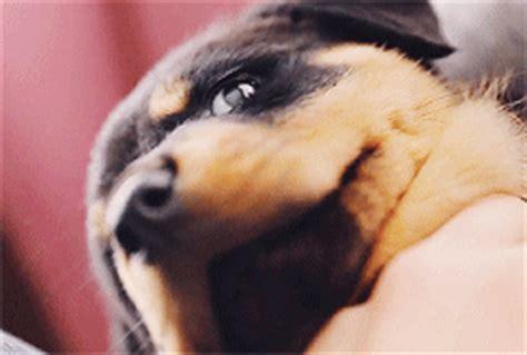 rottweiler puppy tumblr