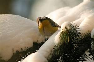 Grillparty Im Winter : v gel im winter foto bild tiere natur bilder auf fotocommunity ~ Whattoseeinmadrid.com Haus und Dekorationen