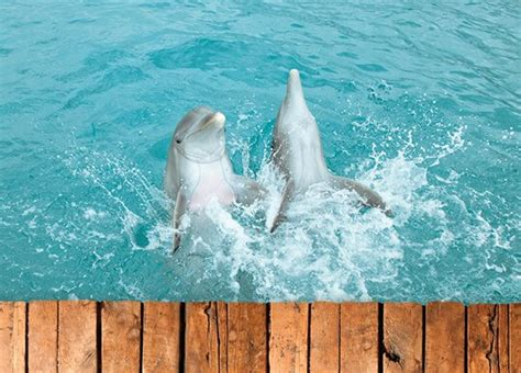 Dolphin Cove: the number one excursion, attraction in Jamaica.
