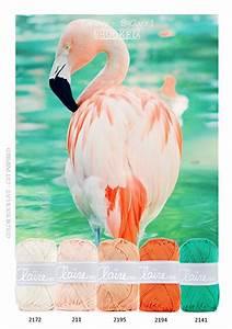 Best 25+ Flamingo color ideas only on Pinterest