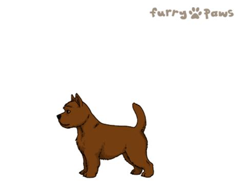 furry paws dog breed colors norwich terrier colors