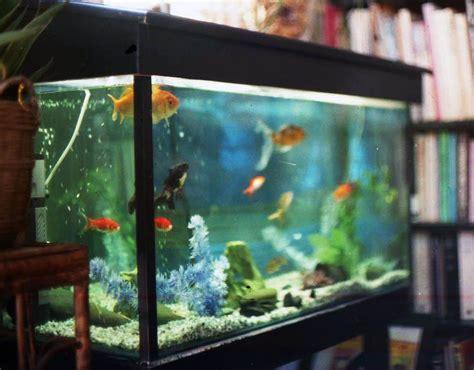 pet     creating  home aquarium