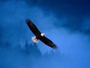 Beautiful Birds Flying - Mobile wallpapers