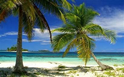 Palm Tropical Beach Trees Summer Landscape Island