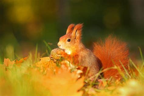 Nalezený obrázek pro živočichové na podzim