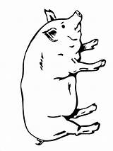 Pig Coloring Pages Animals Printable Mycoloring sketch template