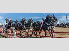 Draft Horse Show Britt, IowaBritt, Iowa