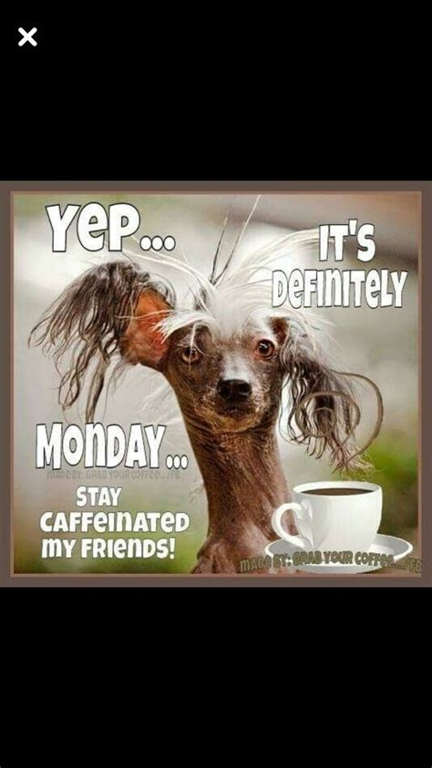 At memesmonkey.com find thousands of memes categorized into thousands of categories. Monday Coffee   Funny good morning quotes, Good morning funny, Monday humor