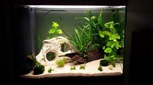Idee Decoration Aquarium : tropical 96 litres ~ Melissatoandfro.com Idées de Décoration