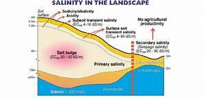 Landscape Salinity  Illustrating The Development Of