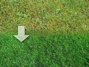Desherbant Mauvaise Herbe : coup de jeune sur la pelouse ~ Premium-room.com Idées de Décoration