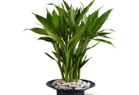 plante feng shui cu frunzis