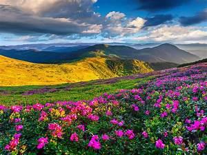 Spring, Mountain, Landscape, Flowers, Purple, Colored, Hills