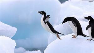 Penguin Wallpapers HD Pictures – One HD Wallpaper Pictures ...