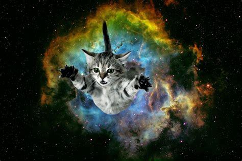 Galaxy Cat Wallpaper (32 Wallpapers)  Adorable Wallpapers