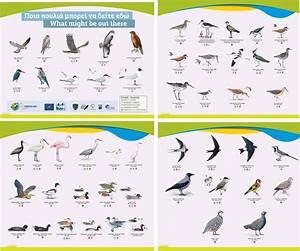 Other bird species - LIFE Oroklini Project