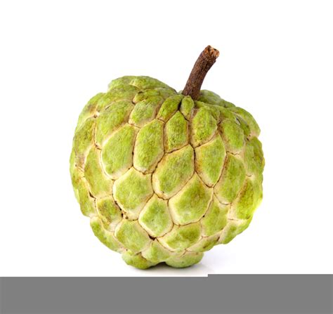Clip Pictures Picture Of Atis Clipart Free Images At Clker