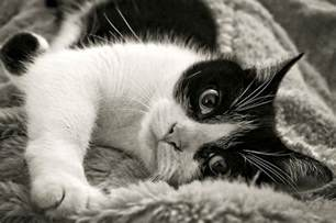 seizures in cats 5 causes of seizures in cats iheartcats