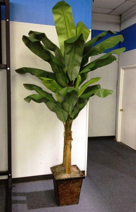 double banana tree indoor plants