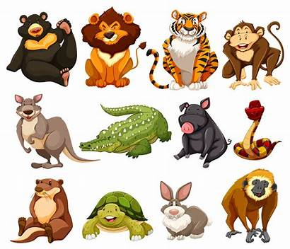 Jungle Animals Different Kinds Vector Clipart Illustration