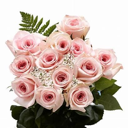 Roses Dozen Pink Delivery Valentine Globalrose Rose