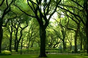 trees central park photos