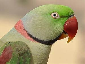 TRAFFIC helps to claw back illegal parrot trade in India ...