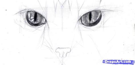 draw cat eyes step  step pets animals