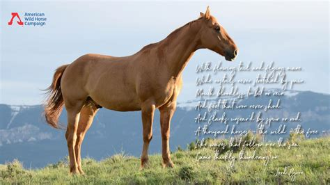 wild quotes horses horse stubborn american campaign occasionally thrill mostly lifetime ever