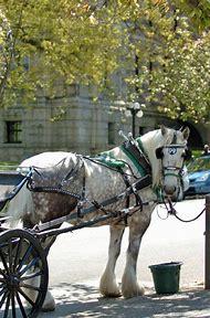 Victoria BC Horse-Drawn Carriage